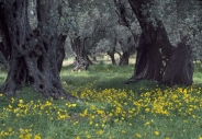 stromy_micek_006 001