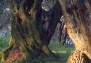 stromy_micek_013 001