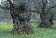 stromy_micek_017 001