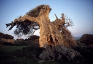 stromy_micek_018 001