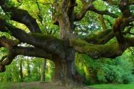 Calendar trees