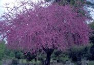 stromy_micek_001 001