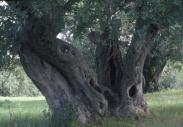 stromy_micek_004 001