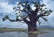 stromy_micek_025 001