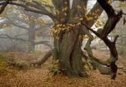 stromy_micek_099 001