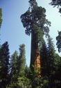 Micek_stromy_022 001
