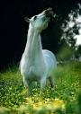 arabian horseANDALUSIAN HORSE180020002.JPG