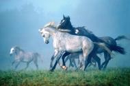 arabian horse180040004.JPG