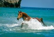 arabian horse180070007.JPG