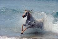 arabian horse180080008.JPG