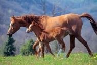 arabian horse180220022.JPG