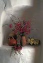 TMicek_kvetiny_06 001