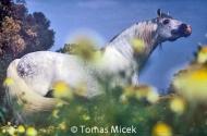 stallion817