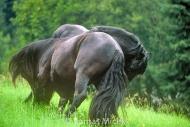 stallion824