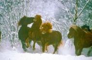 stallion828