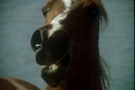 stallion831