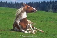 stallion832