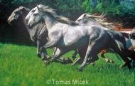 stallion833