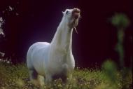 stallion834