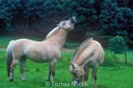stallion837