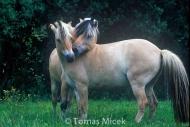stallion838