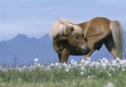 stallion844