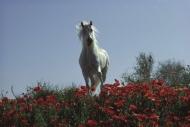 stallion856