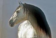 stallion857