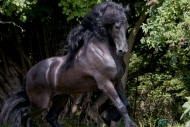 stallion860