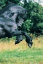 stallion861