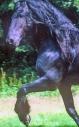stallion862