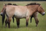 stallion863
