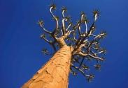 stromy_micek_030 001