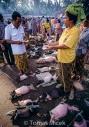TM_Bali_058 001