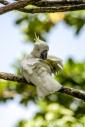 TM_Birds_013