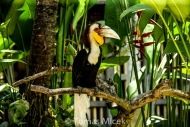 TM_Birds_021