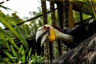 TM_Birds_023