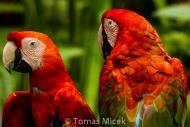 TM_Birds_025