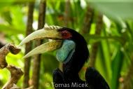 TM_Birds_026