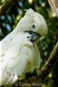 TM_Birds_027