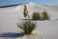 DESERT_0055