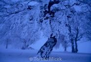 Micek_2013_097 001