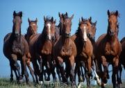 TM_HORSES_002