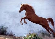 TM_HORSES_003