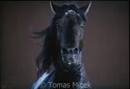 TM_HORSES_004