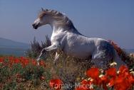 TM_HORSES_006