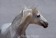 TM_HORSES_007