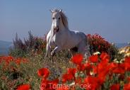 TM_HORSES_008