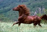 TM_HORSES_009