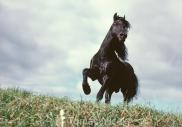 TM_HORSES_010